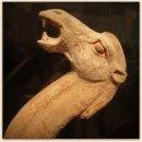Grote Tang dynastie kameel (hoogte 67 cm.